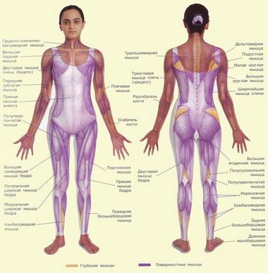 Техническая характеристика эндопротезов