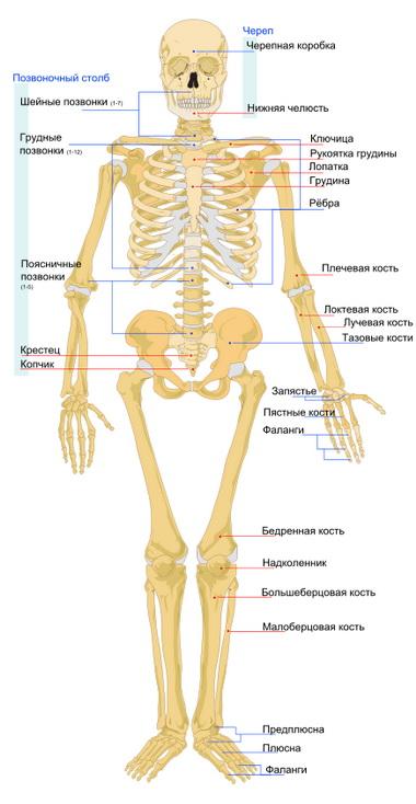 Особенности чрескостного остеосинтеза
