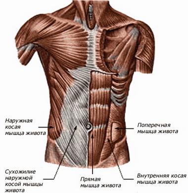 Техника операции при повреждении самой мышцы