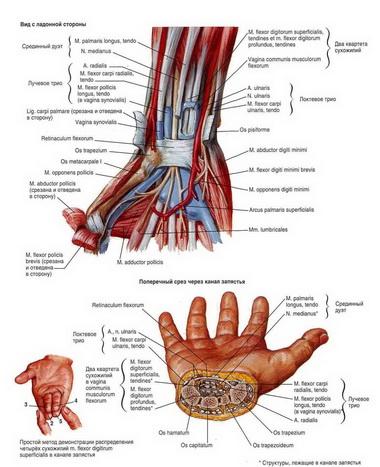 Аутоаллотендопластика сухожилия